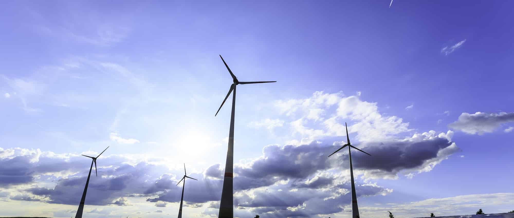 Environmental studies manager for wind industry